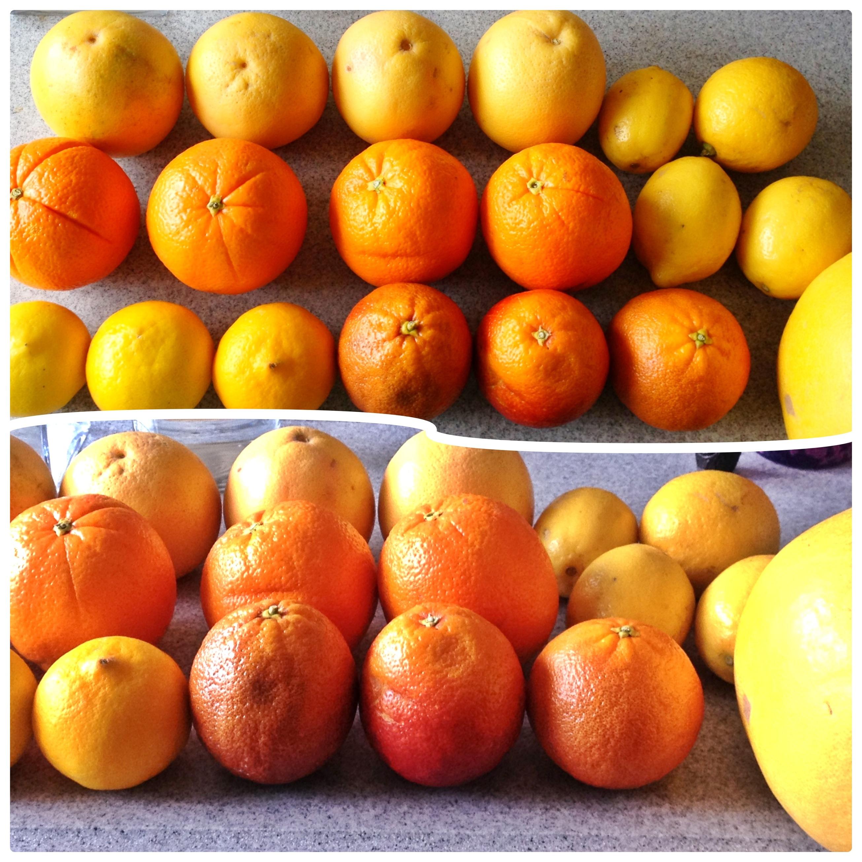 Citrus bounty