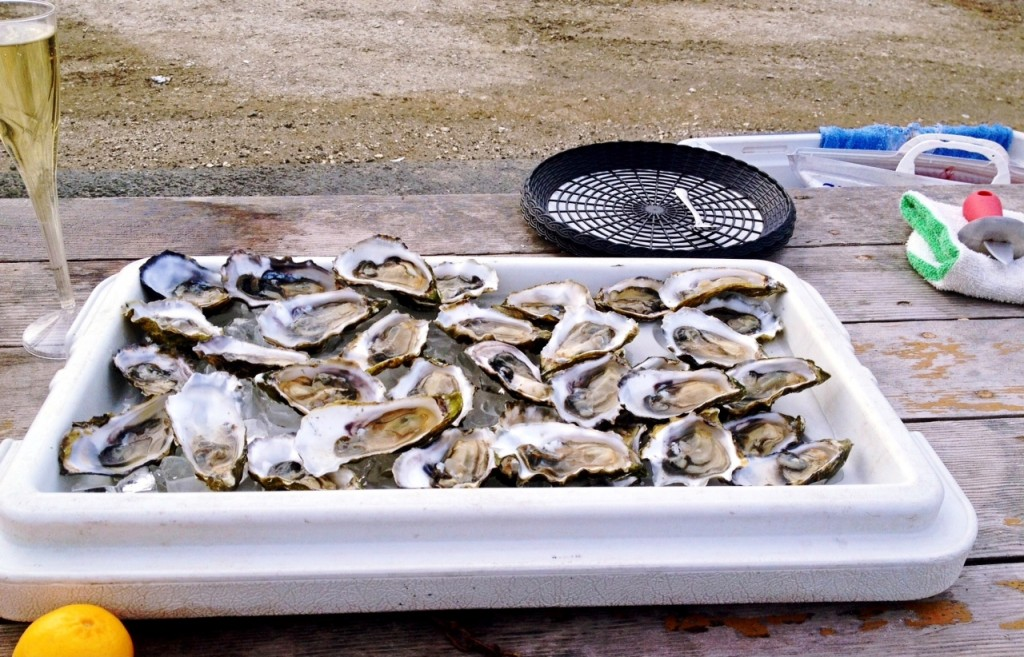 Drake's Bay Oysters