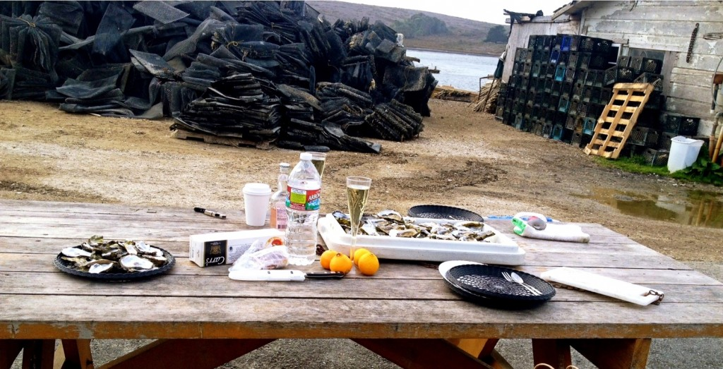 Oyster Picnic